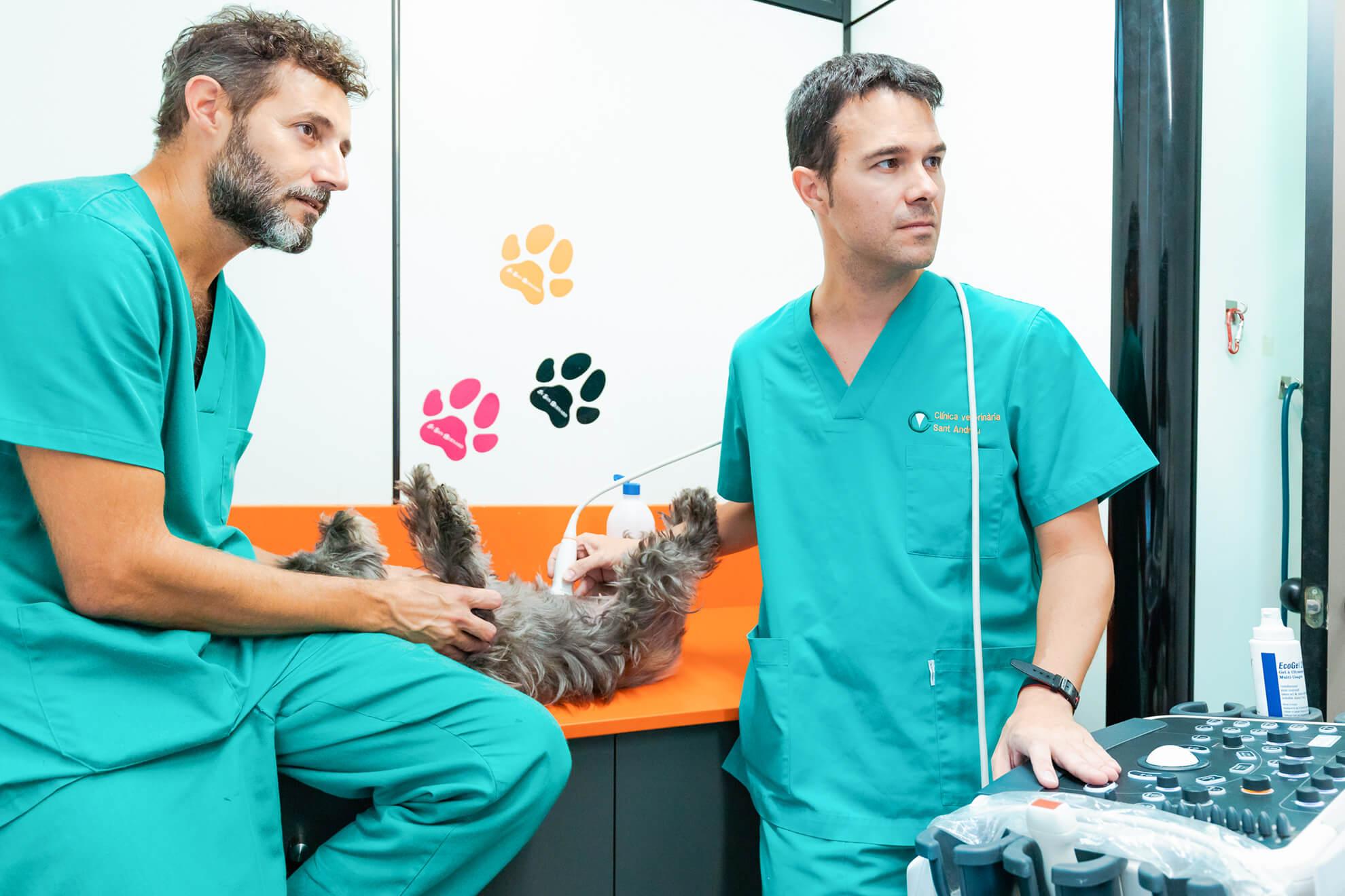 Profesionales veterinarios con perro en Clínica Veterinaria Sant Andreu de Barcelona