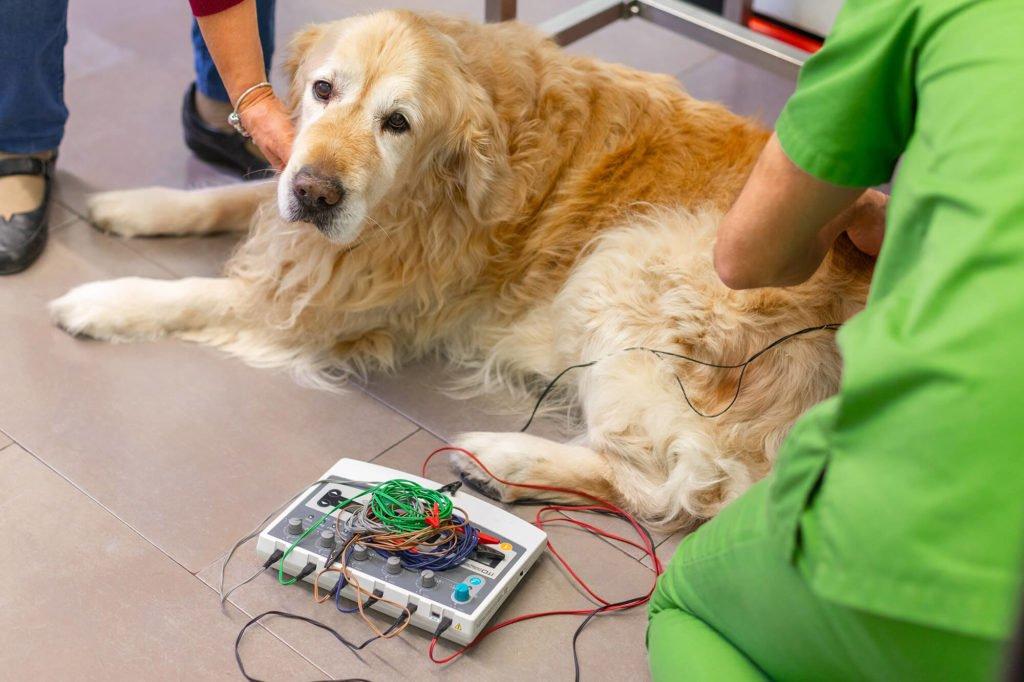 rehabilitacio amb electroestimulador a cv sant andreu
